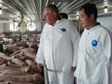 叶传林考察美国种猪场