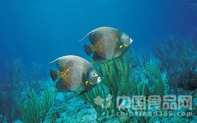 比目鱼 脑袋越大越聪明 头大的鱼更易找到食物