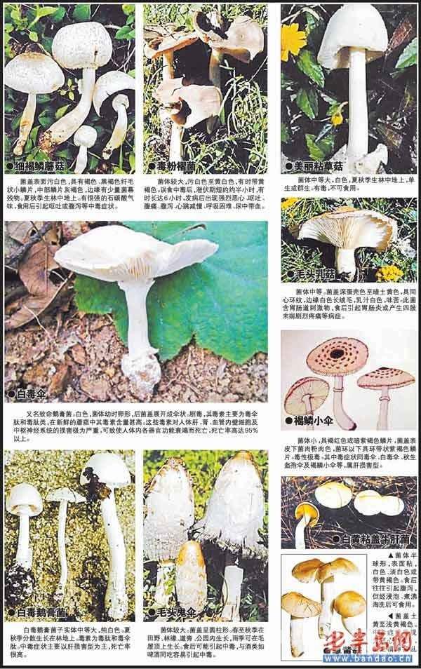 31岁才得的儿子 一锅毒蘑菇毁了这个家