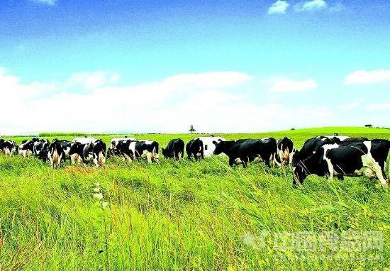 伊利奶农共谋发展新模式