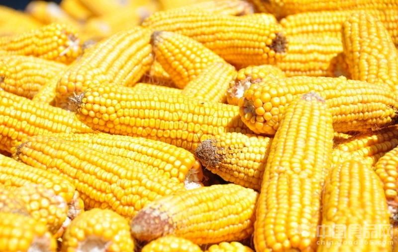 影响光合作用的因素_财政收入_影响农民收入的因素