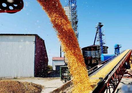玉米收储新机制将首次实施 今年百姓玉米会卖难么?