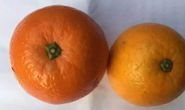 染色橙子惊现银川 食品安全路在何方?